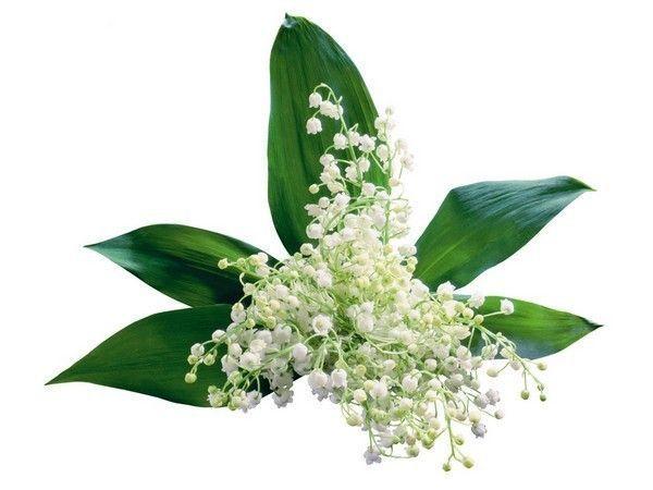 Cartes 1er mai page 2 for Bouquet de fleurs muguet