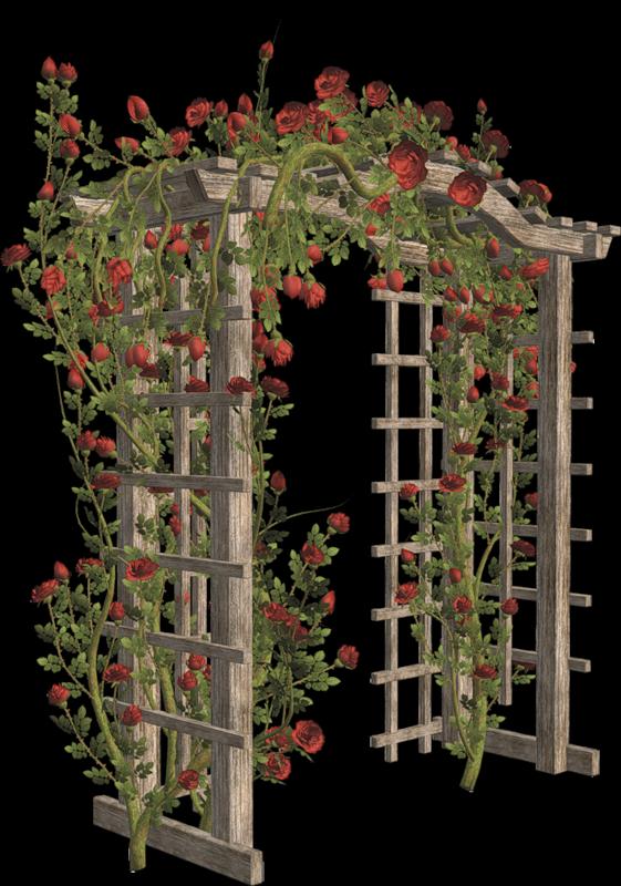 pergola en bois - tube pergola - fleurs rouges