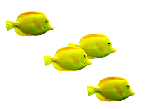 19clupoisson.png