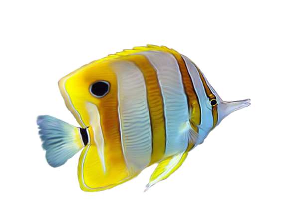 tubes poissons animaux marins decos scrap mer png