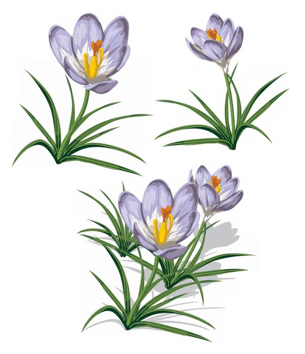 Fleurs des jardins des champs - Dessin de fleur en couleur ...