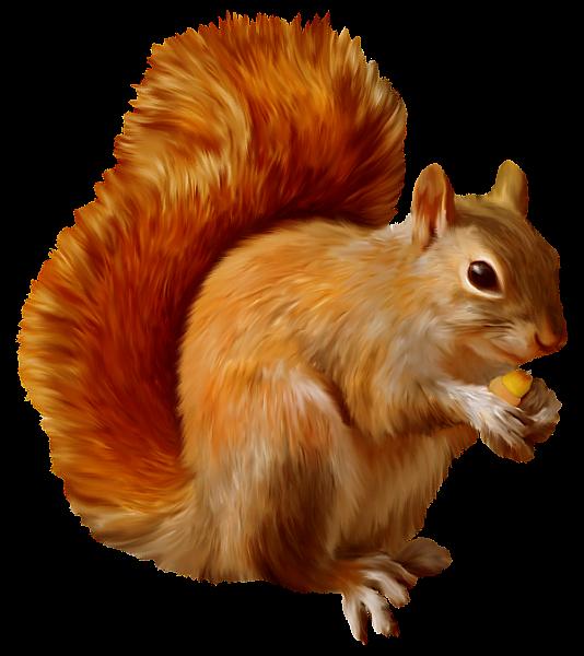 Dessin écureuil Couleur