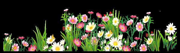 Fleurs De Champs Marguerites Coquelicots Herbes