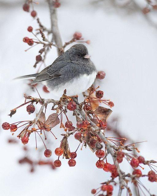 oiseau-image oiseau -neige-hiver-bird-winter-snow-png