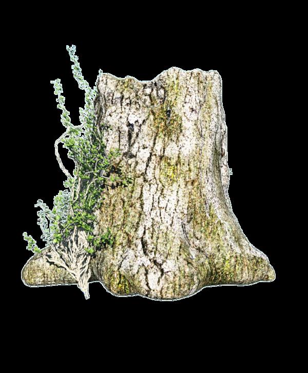tronc d'arbre - vieux et joli tronc d arbre